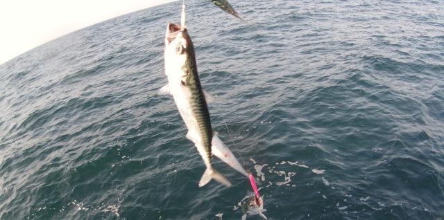 image avant pêche des maquereaux a la mitraillette