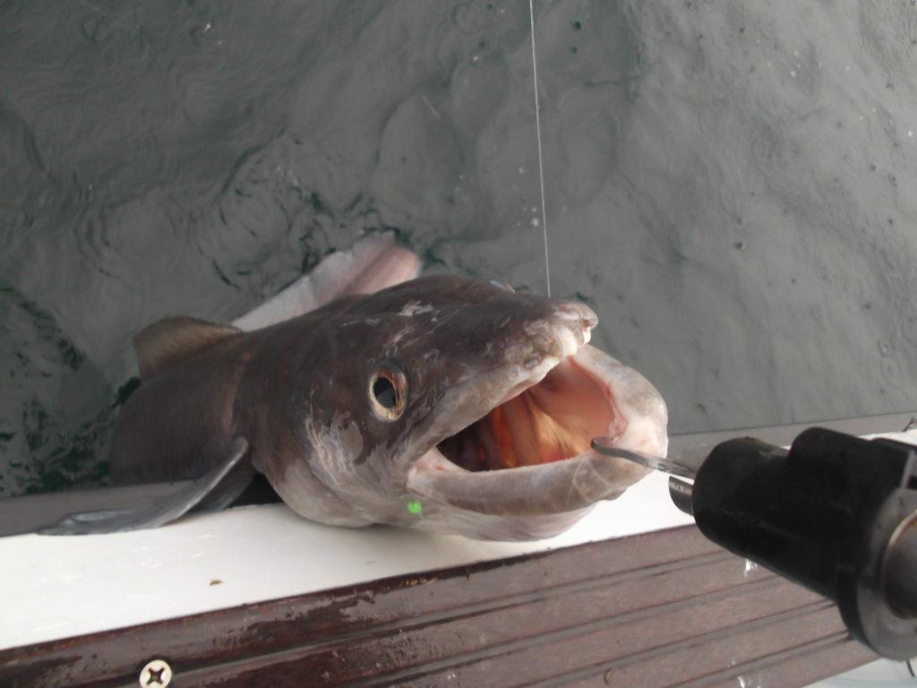 pêcher le congre en bateau