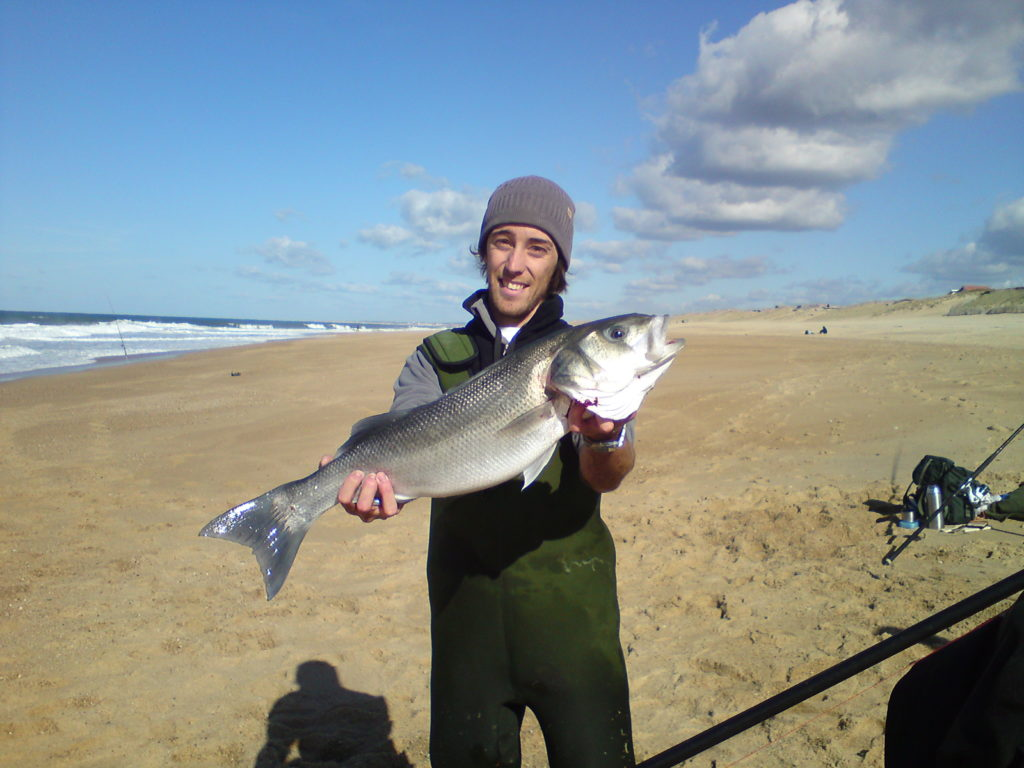 bar pêché en surfcasting
