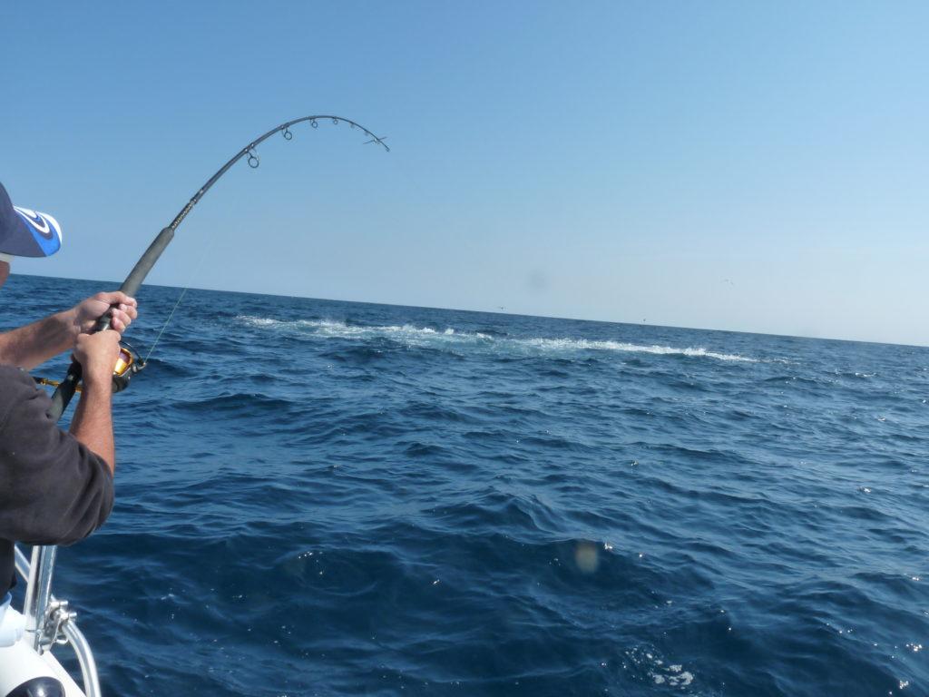 chasse de thon