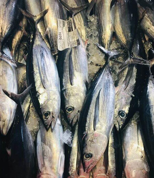 reconnaître les thons blancs ( germons)